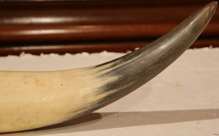 19th Century English Scrimshaw Steer Horn with Black Armorial Crest Engraving